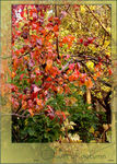 Title: _ Colors of autumn II _Samsung Digimax S850