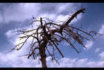 Title: The death of a tree!Canon EOS Digital Rebel XT