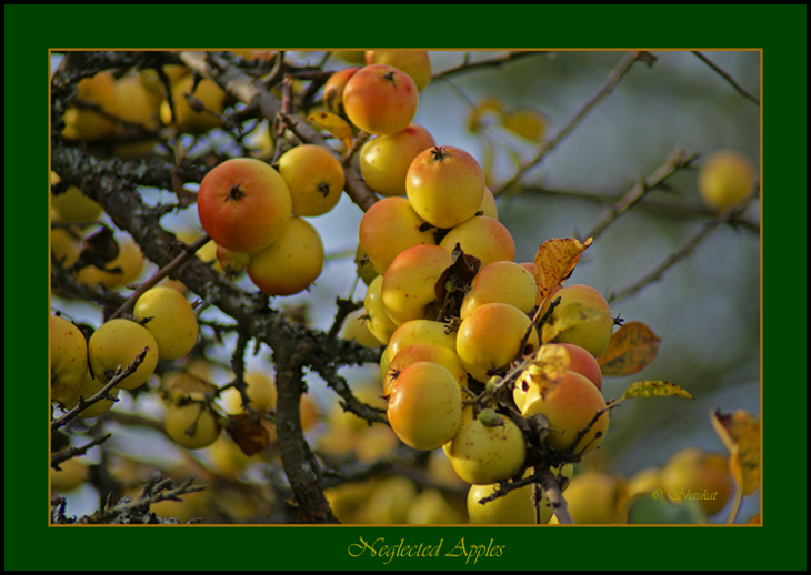 Neglected Apples