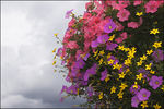 Title: Bouquet on a cloudy day