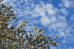 Title: Spring Sky Puget SoundSony Alpha 100 Digital SLR