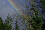Title: Eagle Pair watching Rainbow