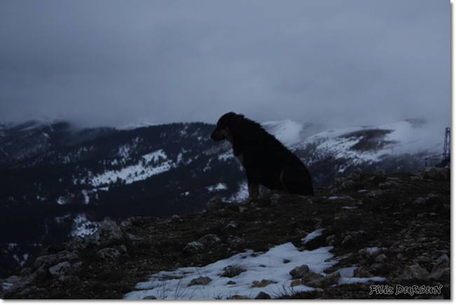 Alone dog in ABANT