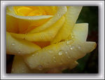 Title: Yellow, after rain...