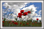 Title: Missing Poppy Time