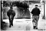 Title: Platero and Me (BW)Canon EOS 1D Mark II