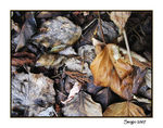 Title: °leaves°°Canon PowerShot A70