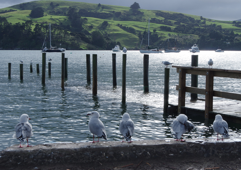 14 little seagulls sitting by the lake