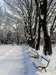 Title: Park in winter