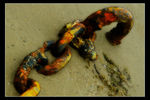 Title: Rusting Chain
