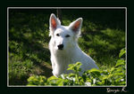 Title: White Dog .Canon 400D Digital