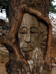 Title: Tree Man in Sao tomeNikon D80