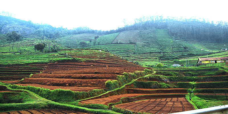 Empty Land for Cultivation