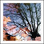 Title: Reflections of autumn