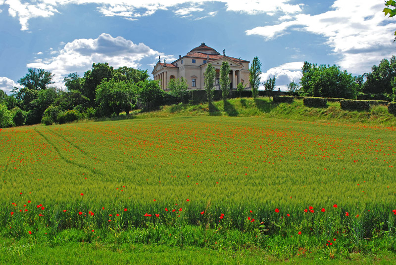 Poppies and renaissance