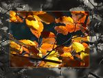 Title: Autumn Colours