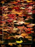 Title: Floating Leaves