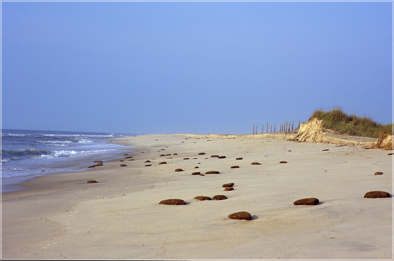 Assateague - sea shore