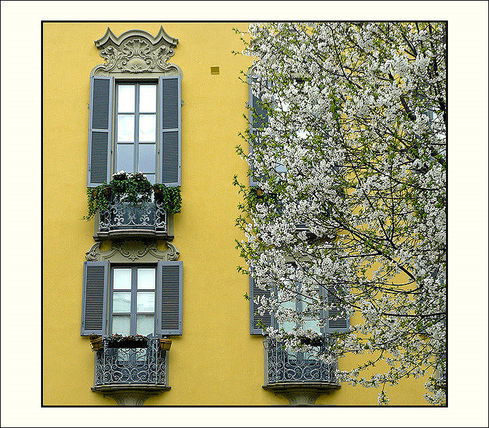 Spring at the window