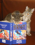 Title: Mummy, what tale will you read me?Canon PowerShot S40