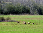Title: First deer sighting - on the runFujifilm Finepix S5600