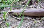 Title: Serpentine slither.Fujifilm Finepix S5600