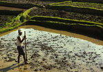 Title: Preparing the Rice Paddies