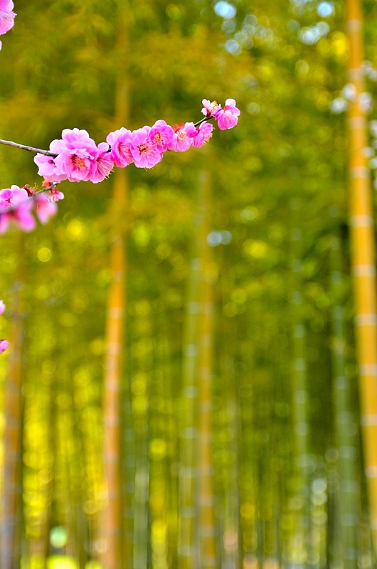 plus flowers and bamboo grove