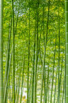 Title: Bamboo Frame