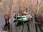 Title: Boats and trees...