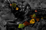 Title: Leaves in Water