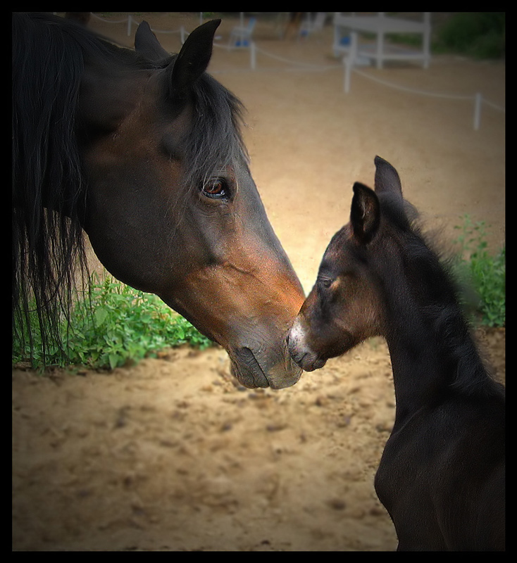 Bonding (Mare and Foal)