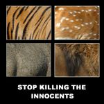 Title: STOP KILLING THE INNOCENTS !!!Nikon D-70