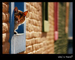 Title: ..Who`s there?..