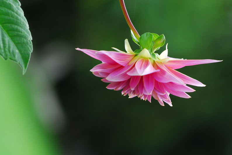 Submissive Flower