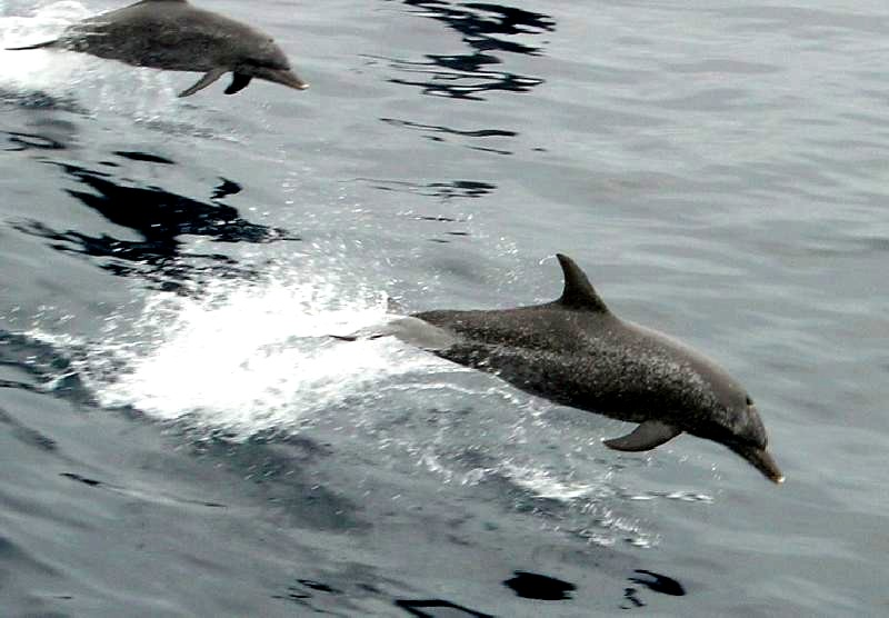 Dolphing flying