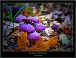 Title: The colors of the forestNikon D80