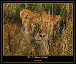 Title: The Lion King