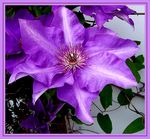 Title: Purple RoyaltyKodak Easyshare LS753