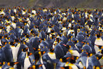 Title: Sea of PenguinsNikon D300