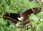 Title: The Great Eggfly