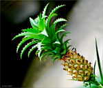 Title: Pineapple fruitNikon D80