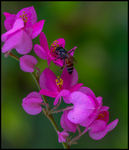 Title: Bee On A Flower