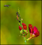 Title: Bugs on a Flower