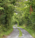 Title: Irish Country Road