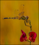 Title: Dragonfly on a Flower