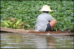 Title: Thai River Farmer