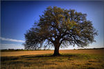 """Title: """"Tree Obsession"""" Camera: Canon EOS 30D"""