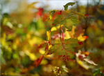 "Title: ""Bokeh of Leaves on FilmMamiya M645 Super"