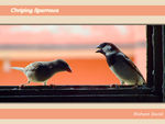 Title: House Sparrows Are Only Chirpers
